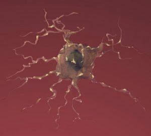 Alzheimer's disease: how could stem cells help?
