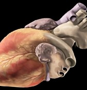 Watch Lab-Grown Heart Tissue Beat On Its Own